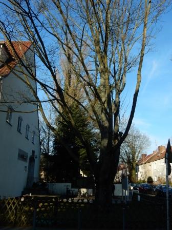 Baumfällung am Haus Eichkamp