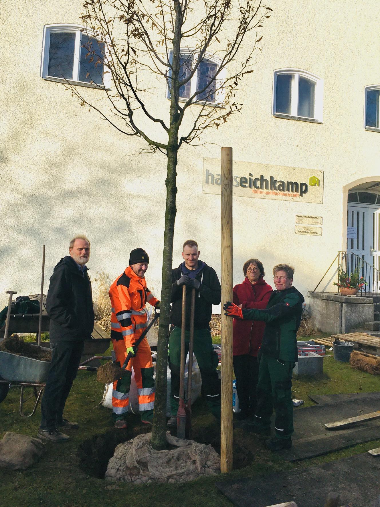 Ein neuer Baum schmückt den Vorgarten vom Haus Eichkamp