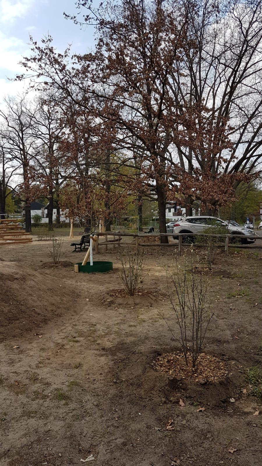 Der Spielplatz vor dem Mommsenstadion wächst und gedeiht